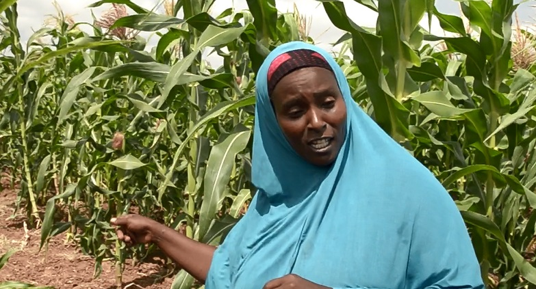 Farmers in Lower Shabelle sing praises of soil… (Radio Ergo)