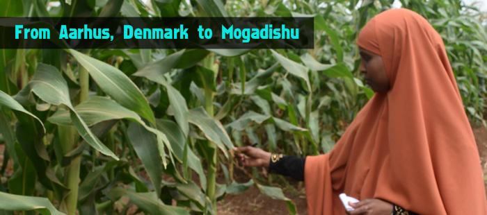 From Aarhus (Denmark) to Mogadishu