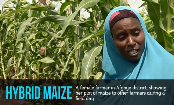 fadumo nur showing maize