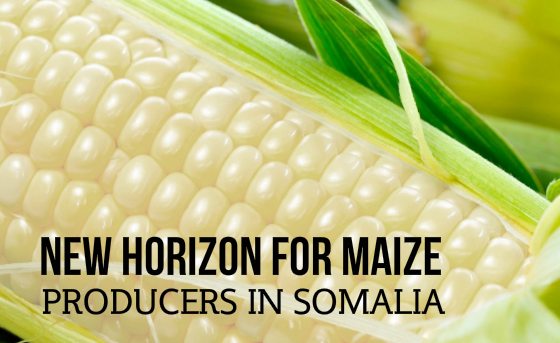 New Horizon for Maize Producers in Somalia