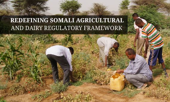 Redefining Somali Agricultural and Dairy Regulatory Frameworks