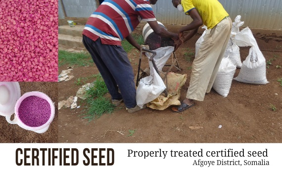Why Use Certified Seed?
