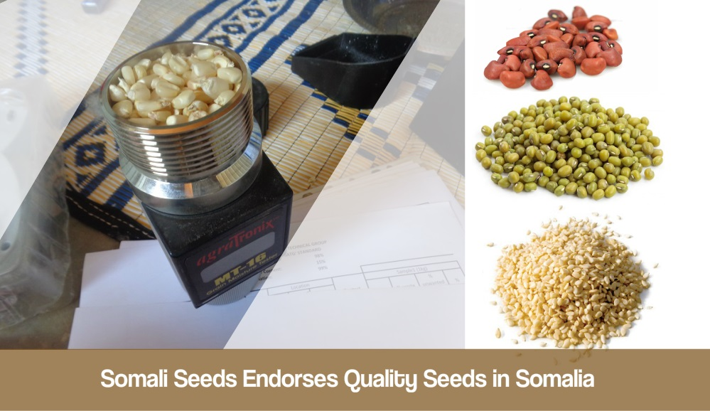 Somali Seeds Endorses Quality Seeds in Somalia