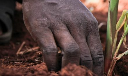 AFUUG: Makes a Crop More Resilient to Drought